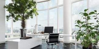 Por que ter plantas no escritório aumenta a produtividade?